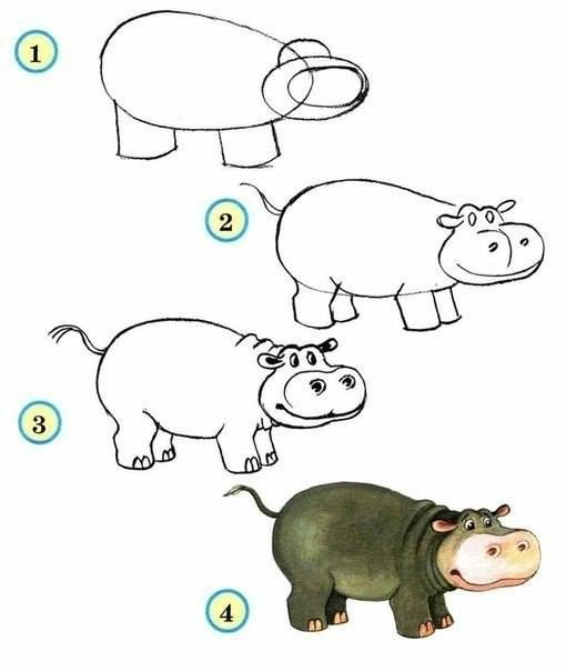 510x604 How To Draw Zoo Animals Easily