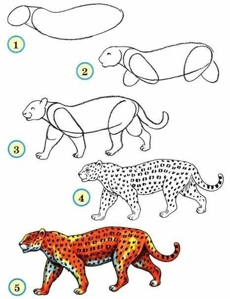 466x604 How To Draw A Leopard Kids Zoos, Animal And Draw