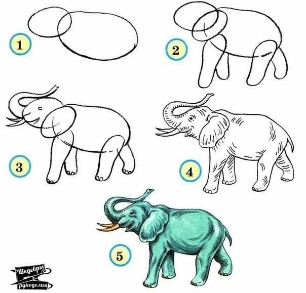 604x579 How To Draw An Elephant How To Draw Zoos, Animal