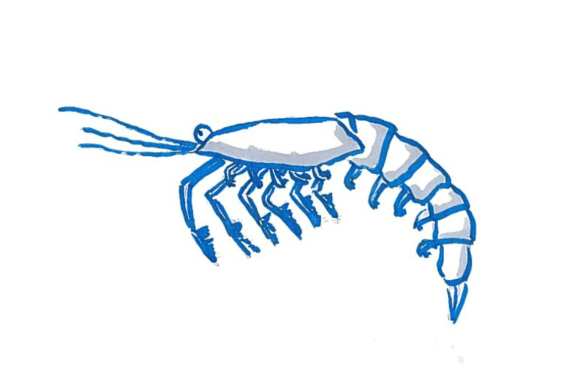 1184x788 Seafood Clipart Zooplankton