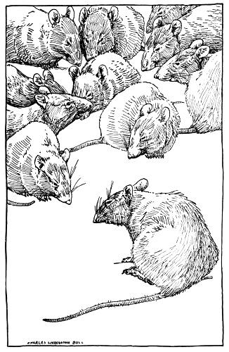 326x500 Drawing Of Rats