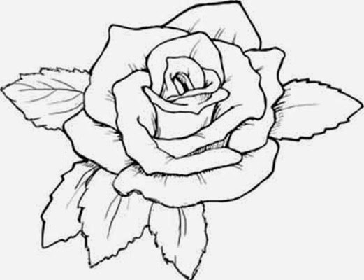 521x400 Flowers Coloring Pages Rose Many Flowers
