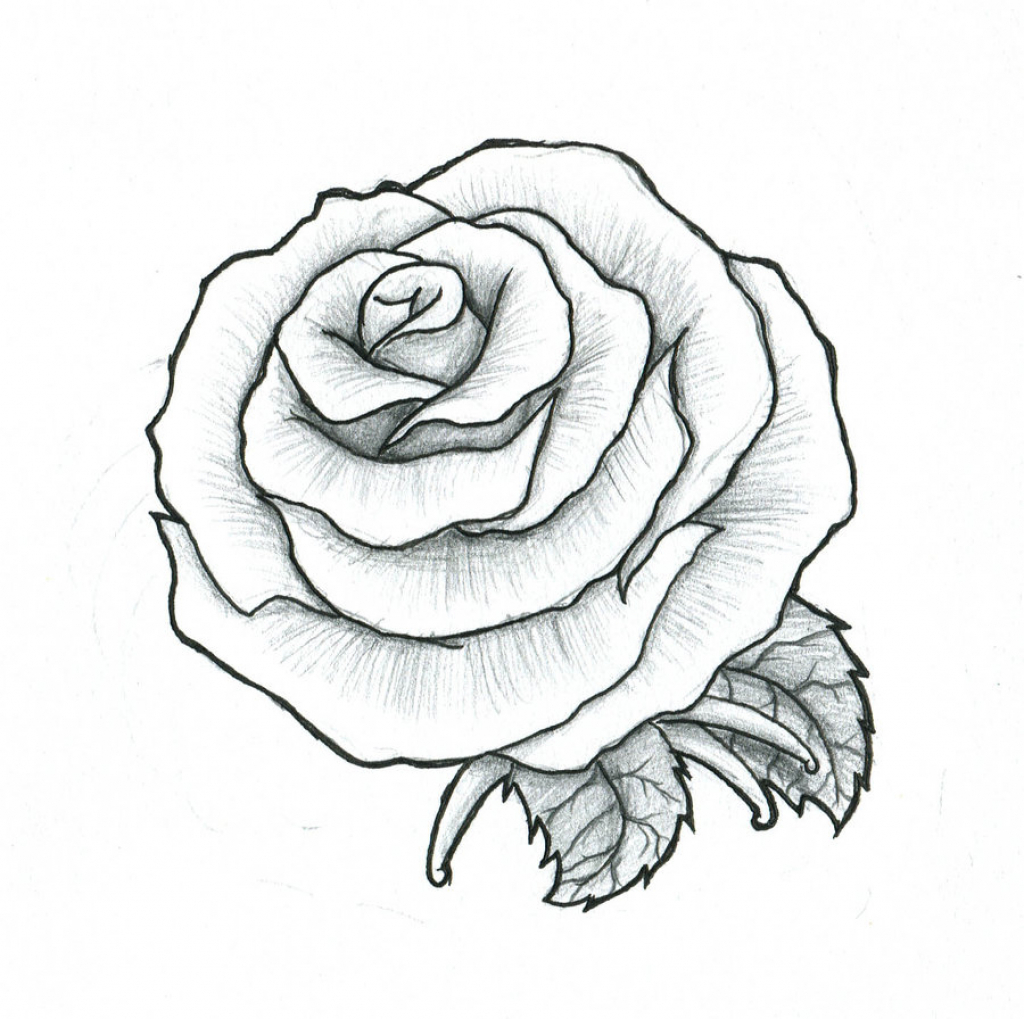 1024x1019 Ideas Of Draw A Roses Drawing For Rose Tattoo Photo 2 Real Photo