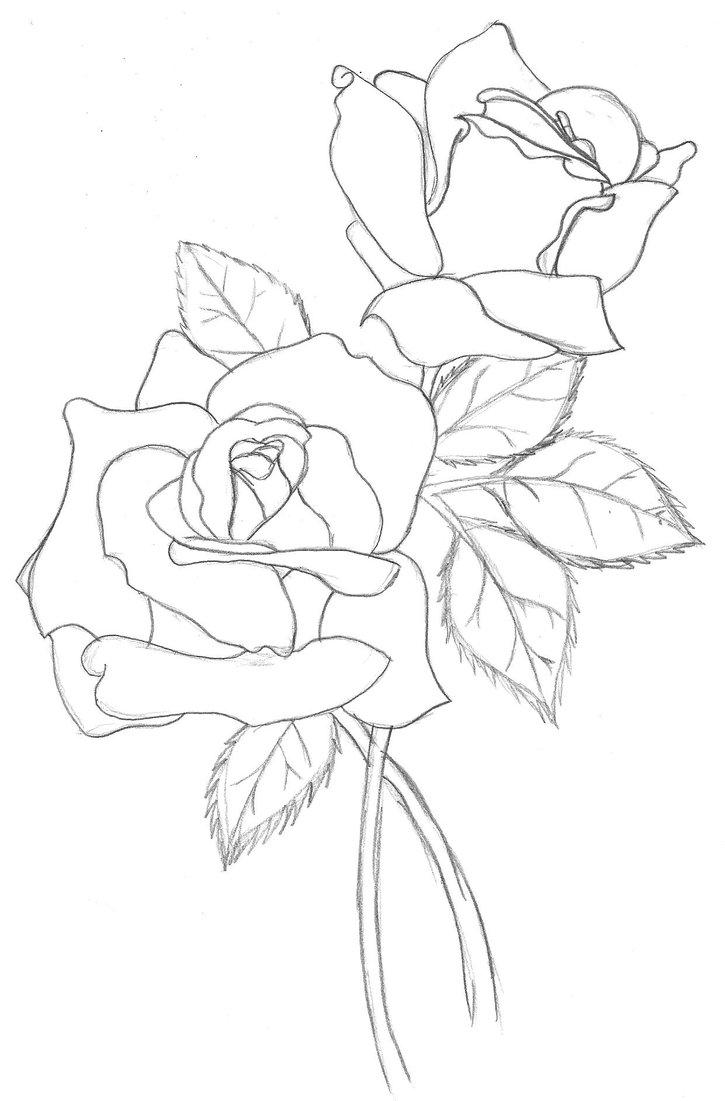 725x1101 Roses Outline By Ashton18