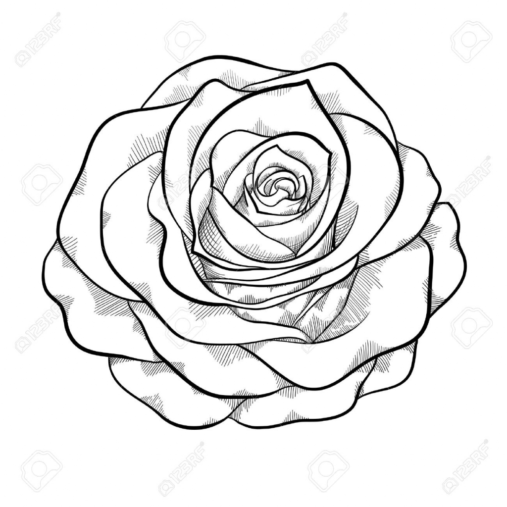 1024x1024 Black And White Drawing Of A Rose Black And White Rose Drawing