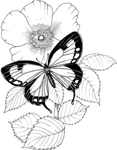 236x303 Butterfly On Flower Drawings Pencil 3d Butterfly Drawings