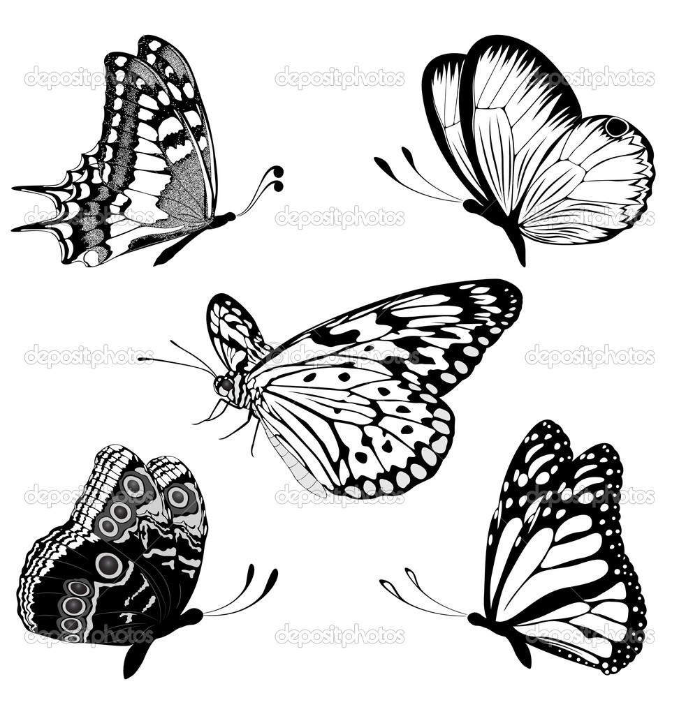 972x1023 Set Black White Butterflies Of A Tattoo Vector By Maristep