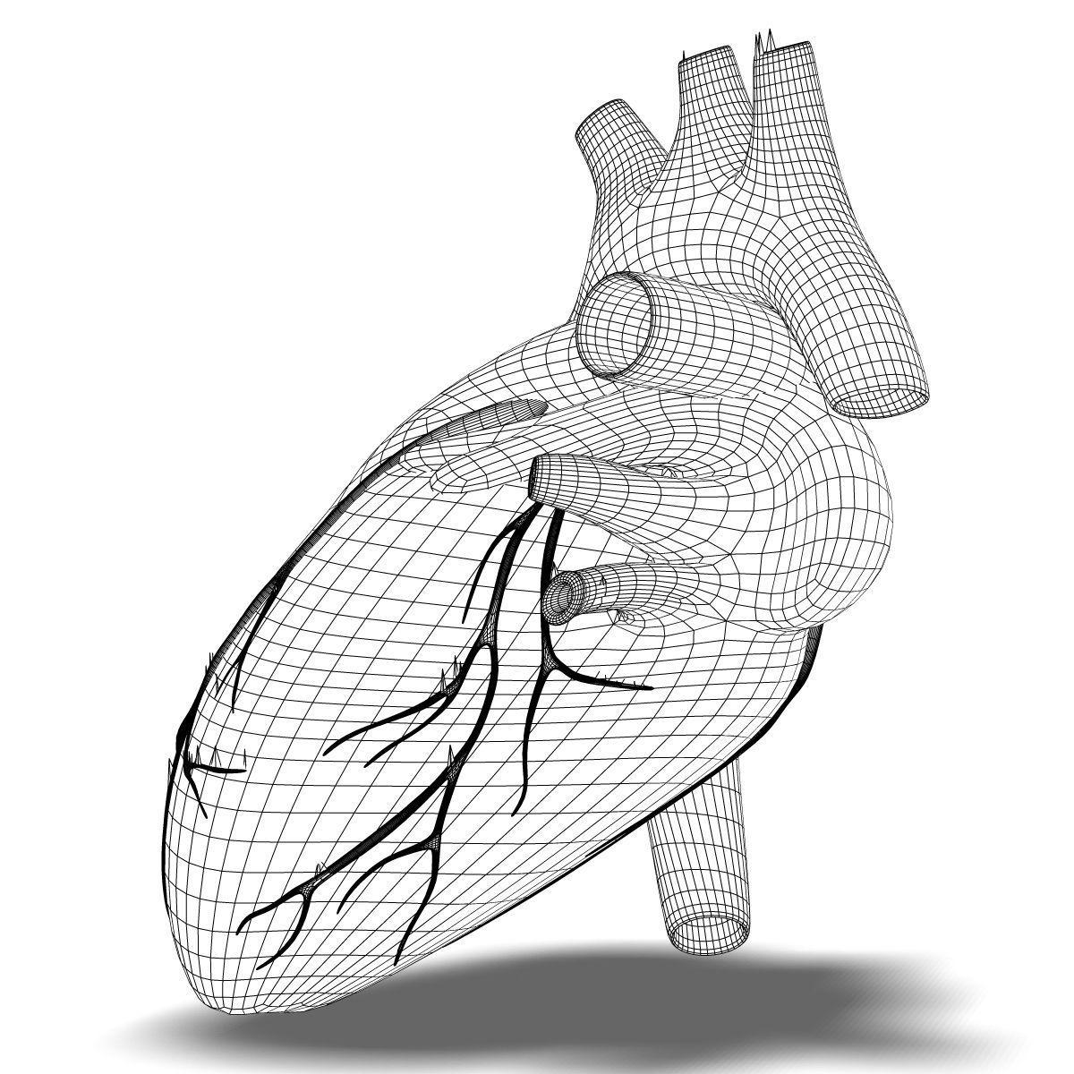 1200x1200 3d Human Heart Anatomy Cgtrader