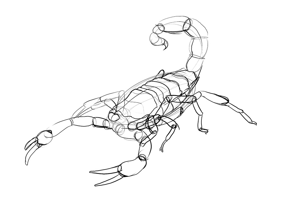 960x719 Lesson 4 Drawing Insects And Arachnids 3d Drawing Blocking