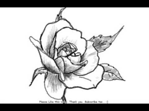 480x360 How To Draw A Beautiful Rose Flower
