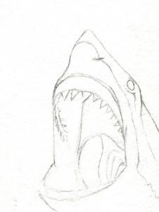 226x302 How To Draw A Cool Shark Step 7 Crafty Things