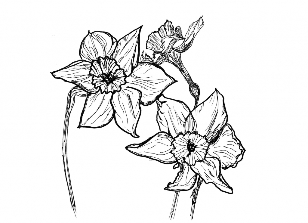 1024x741 3d Sketches Of Flowers Flower Drawings Drawings And Flower