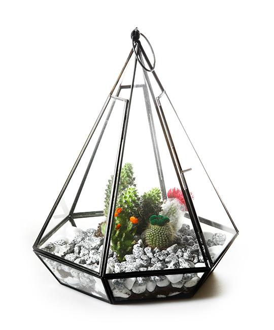 540x650 Cacti Glass 3d Models