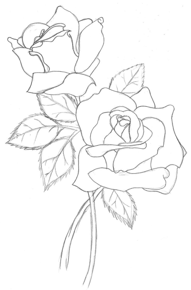736x1117 Full Hd Rose Line Drawing Photo 3d Best Rose Outline Ideas