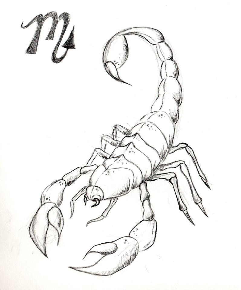 797x960 Pictures 3d Scorpion Pencil Drawing,
