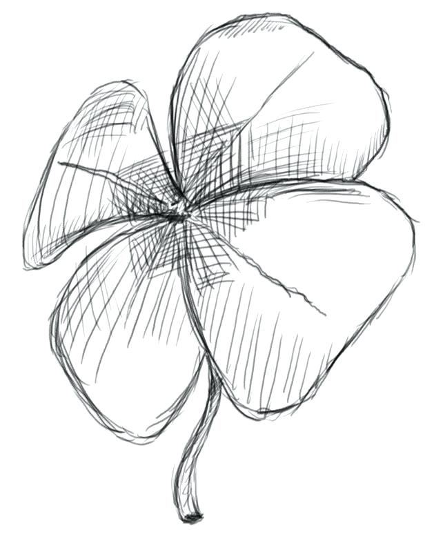 629x800 4 Leaf Clover Coloring Page Gallery For Cool Four Leaf Clover