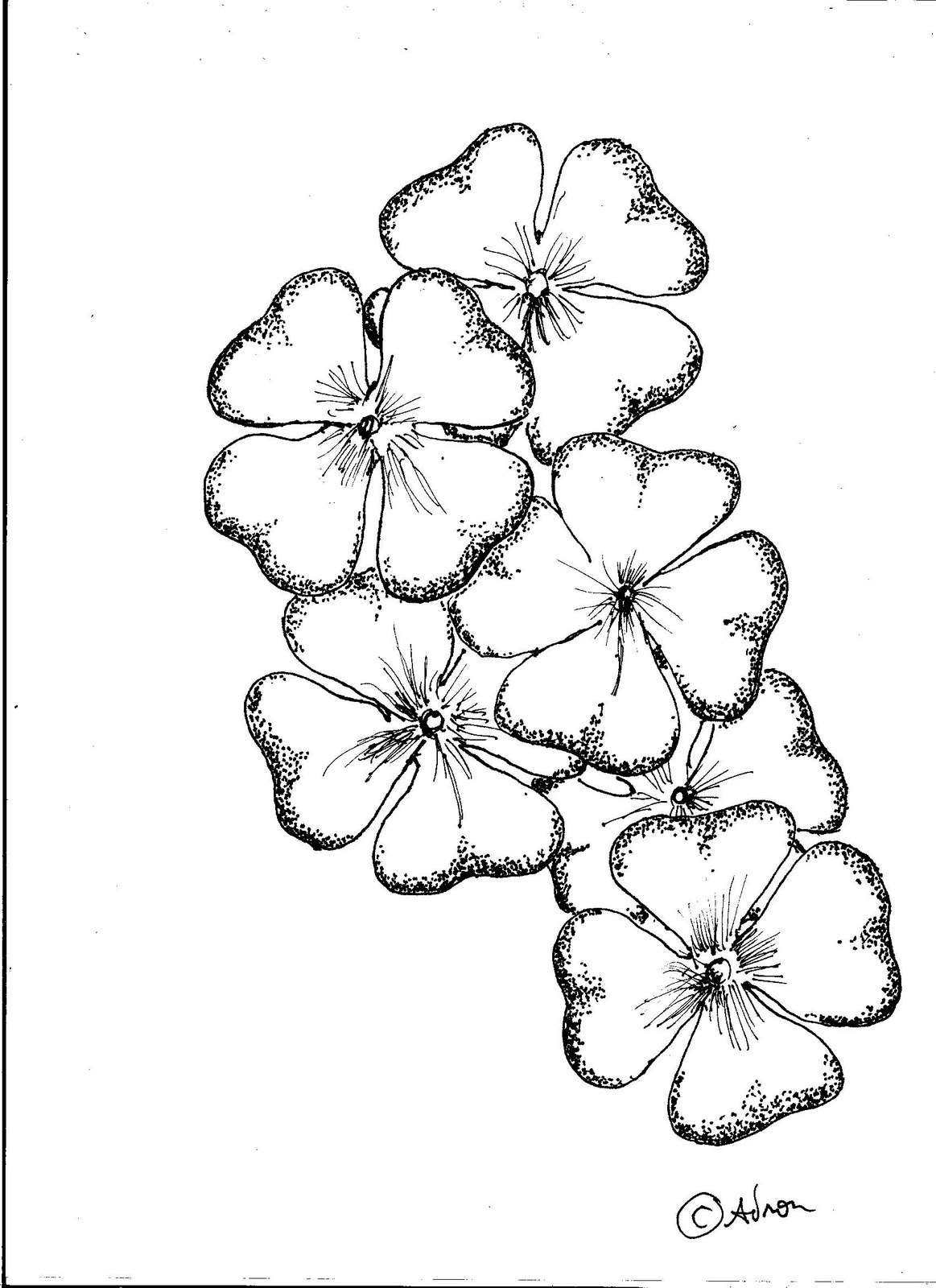 1163x1600 4 Leaf Clover Drawings Step Finished Four Leaf Clover How To Draw