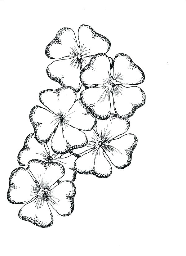 600x825 Four Leaf Clover Coloring Pages