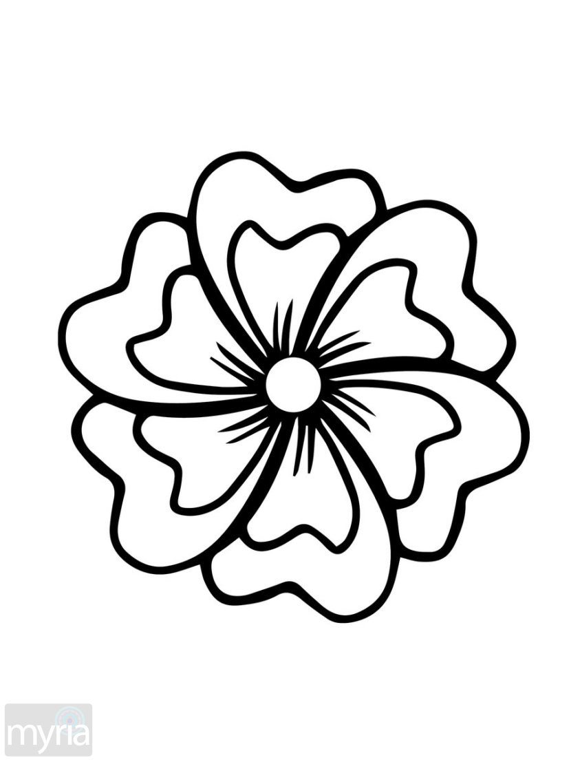 Flower Petals Line Drawing : Petal flower drawing at getdrawings free for