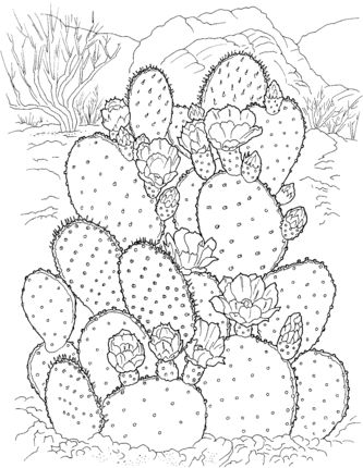 333x430 9 Best 5th Grade Cactus Images On Cactus Drawing