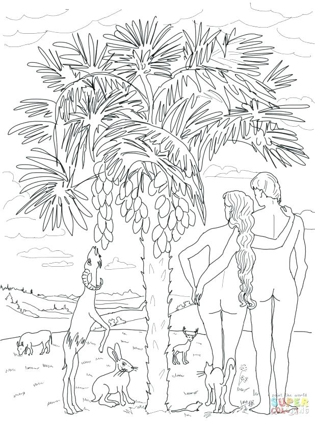 618x824 Seven Days Creation Coloring Pages Bible Pic Photo Story