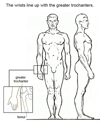 352x442 7 Figure Drawing Proportions To Know