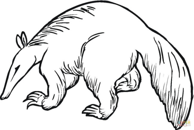 650x437 Aardvark Coloring Pages 4 Nice Coloring Pages For Kids