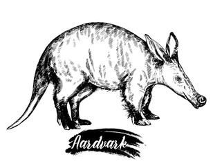 308x240 Search Photos Aardvark