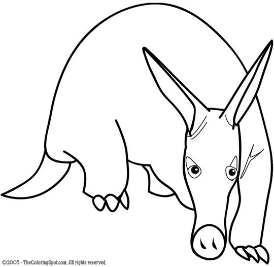 540x526 Aardvark Coloring Pages To Print Animal