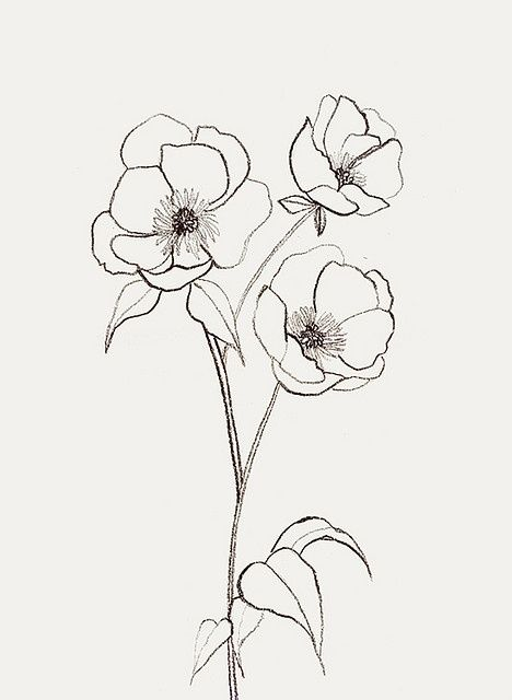 468x640 Awomaninscience Flower Sketches, Woman And Sketches