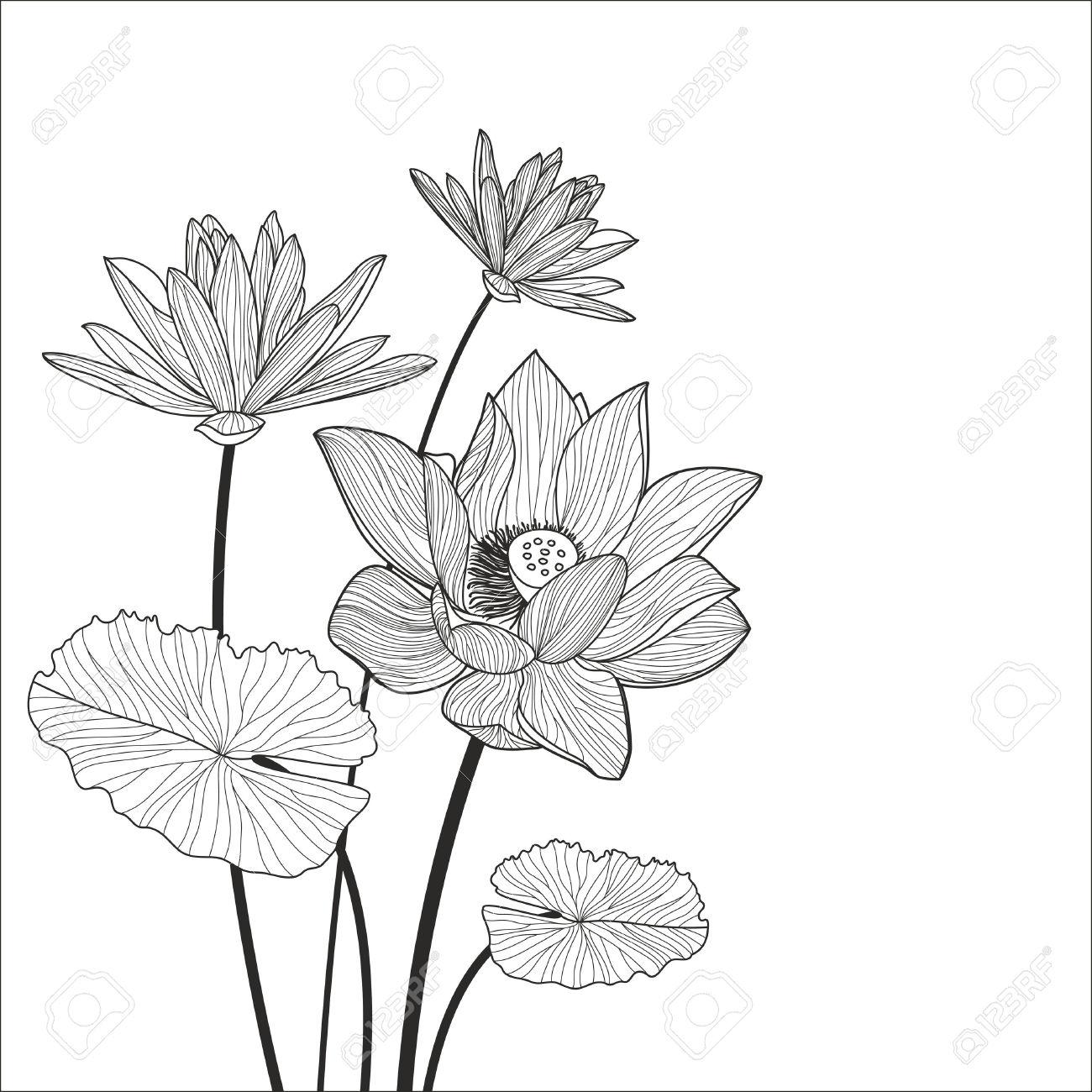 1300x1300 Lotus Flower Line Drawing Beautiful Lotus Flower Line Illustration