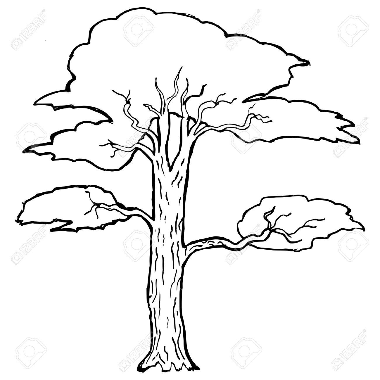 1300x1300 Hand Drawn, Vector, Cartoon Illustration Of Acacia Royalty Free
