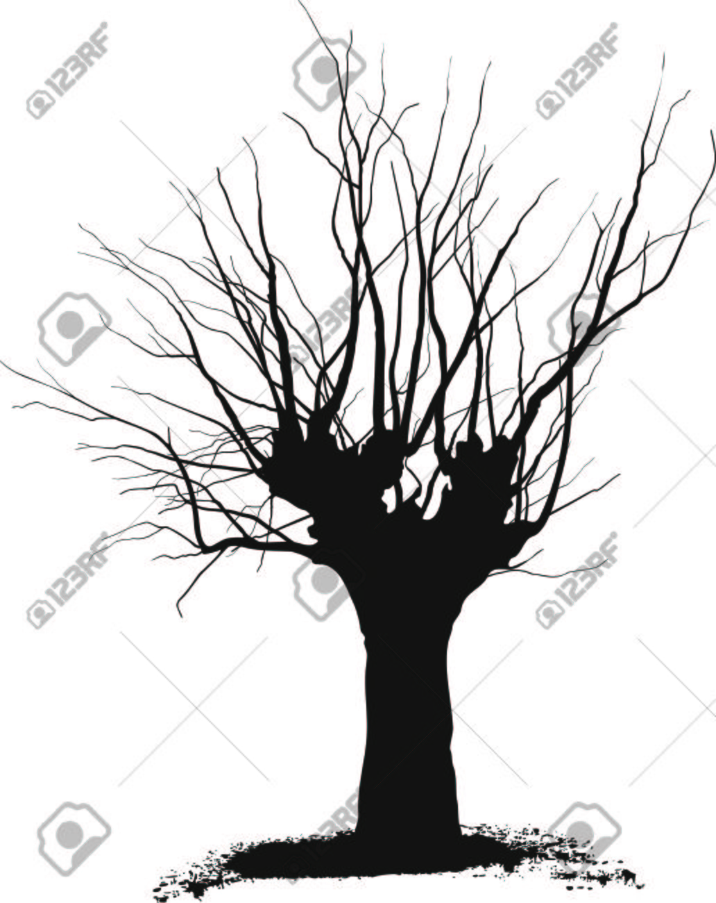 1032x1300 Silhouette Acacia Tree Black Drawings On A White Background