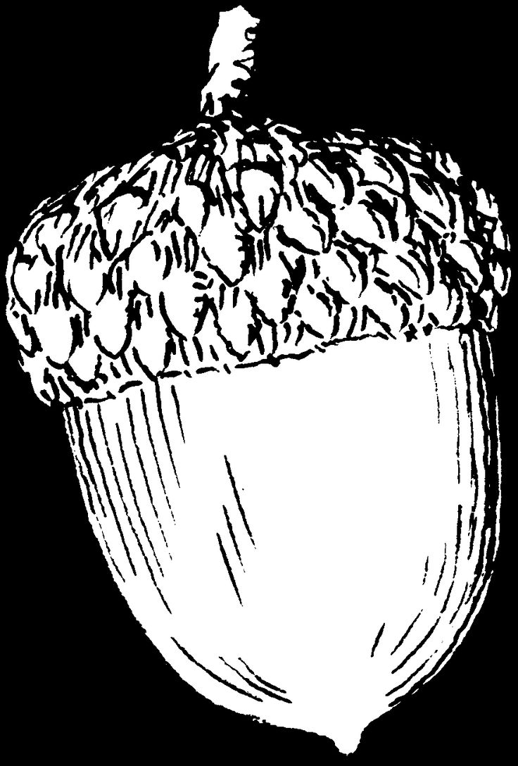 736x1088 Best Acorn Drawing Ideas On Squirrel Illustration