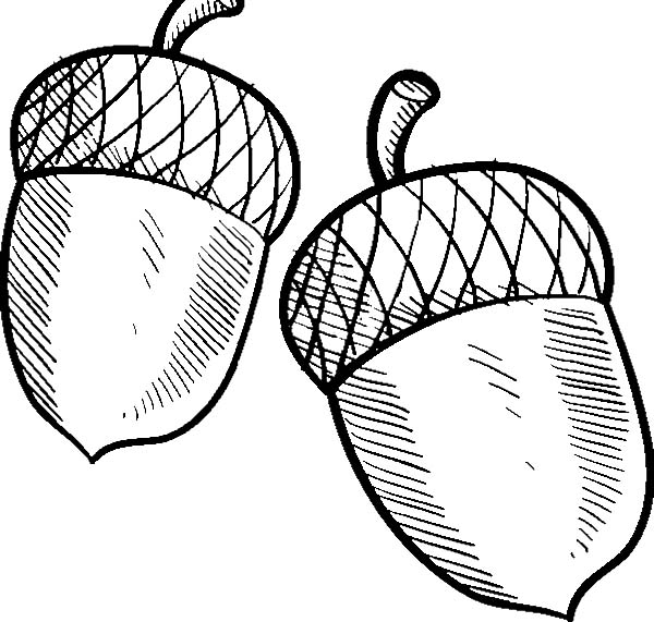 picture about Acorn Printable named Acorn Drawing at  Absolutely free for unique employ