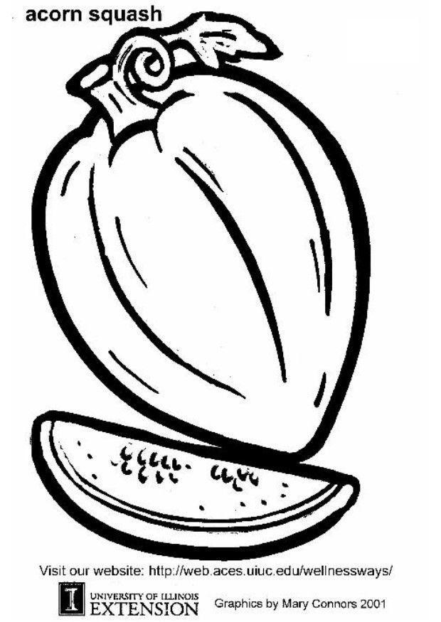 620x875 Coloring Page Acorn Squash