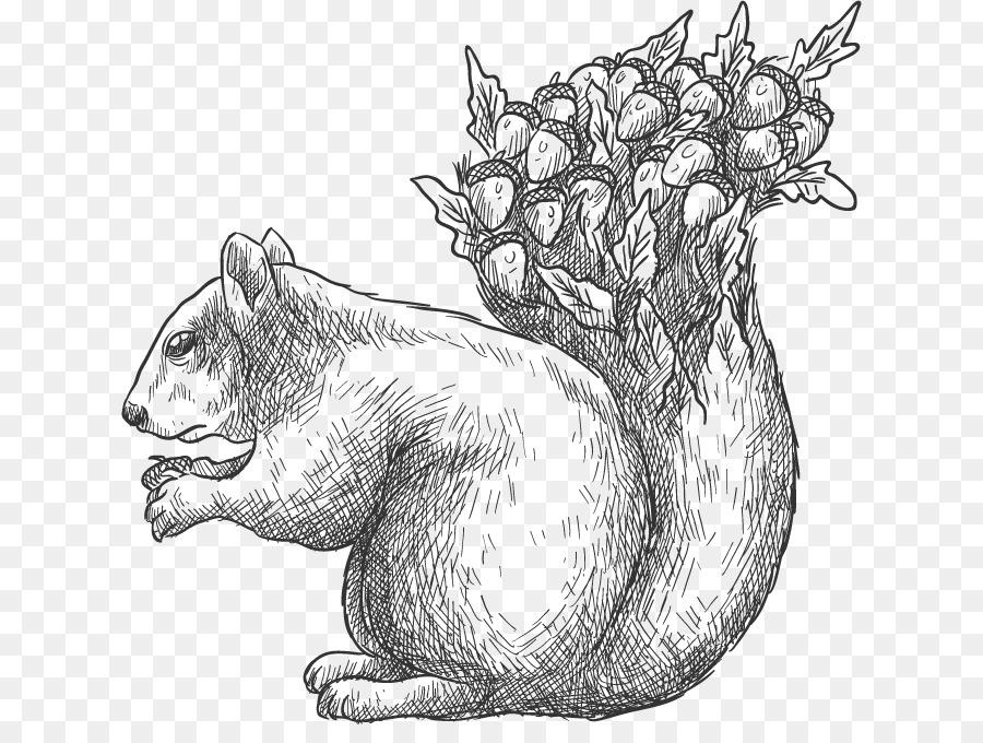 900x680 Drawing Euclidean Vector Tree Squirrel Acorn