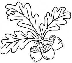 Acorns Drawing