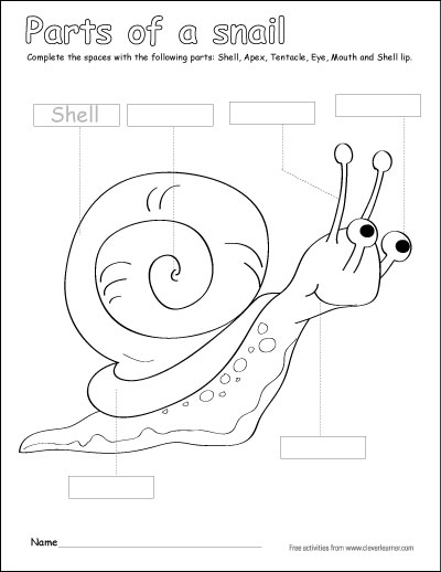 400x518 Label And Color The Parts Of A Snail