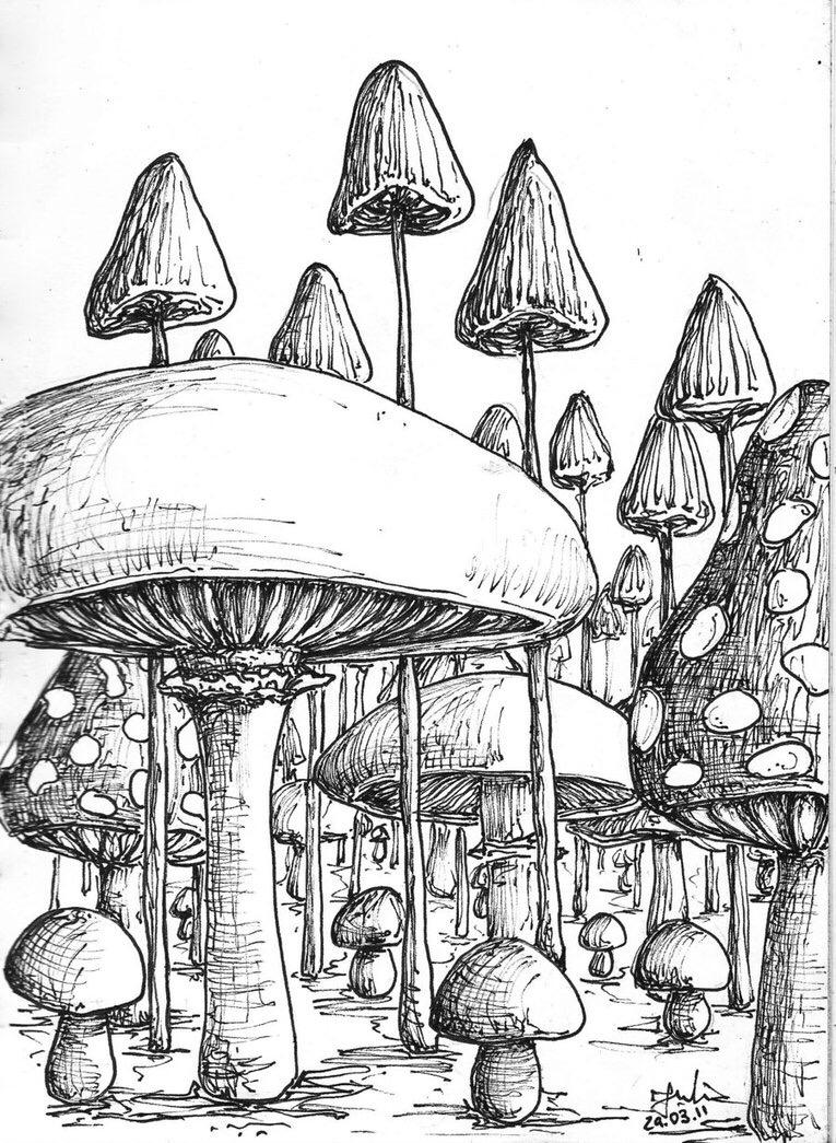 765x1045 This Is Incredible Artwork Mushrooms, Drawings