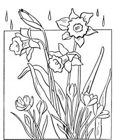 236x288 Hibiscus Drawings Sketches Flowering Branch Of Hibiscus