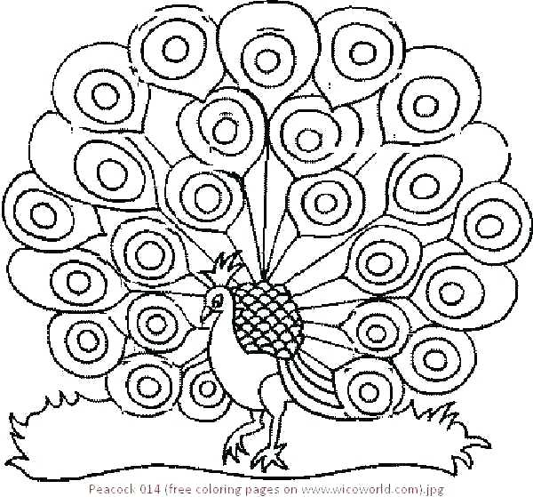 600x559 Classy Coloring Pages Peacock Online Advanced Colouring Page