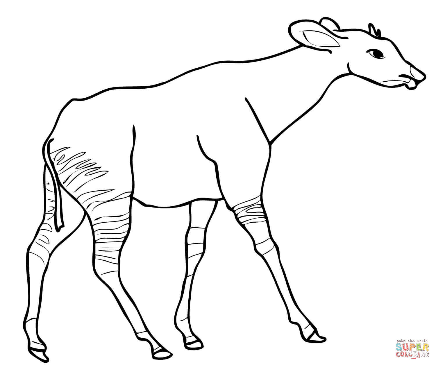1500x1256 Okapi From Central Africa Coloring Page Free Printable Coloring