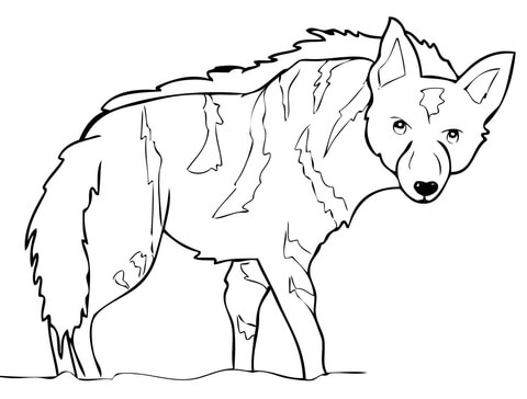 480x364 Aardwolf From Africa Coloring Page Free Printable Coloring Pages