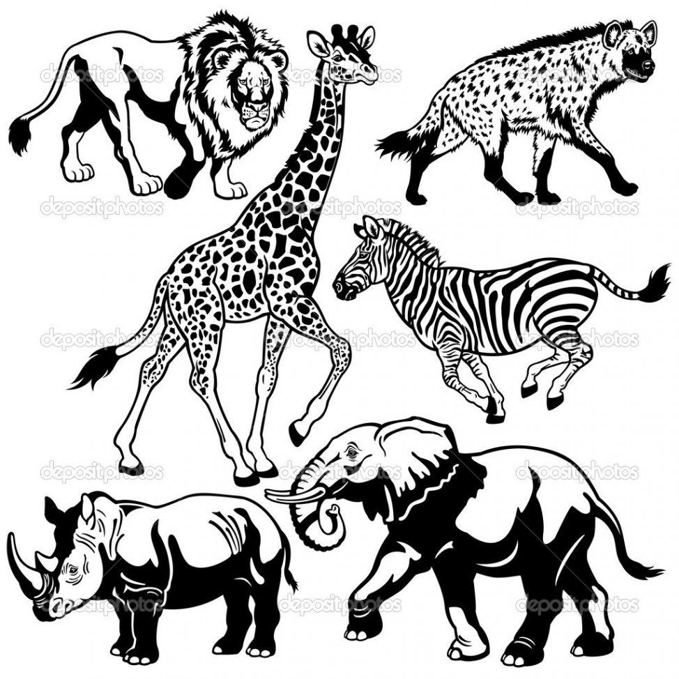 974x974 Coloring Pages Drawing Safari Animals Drawing Safari Animals
