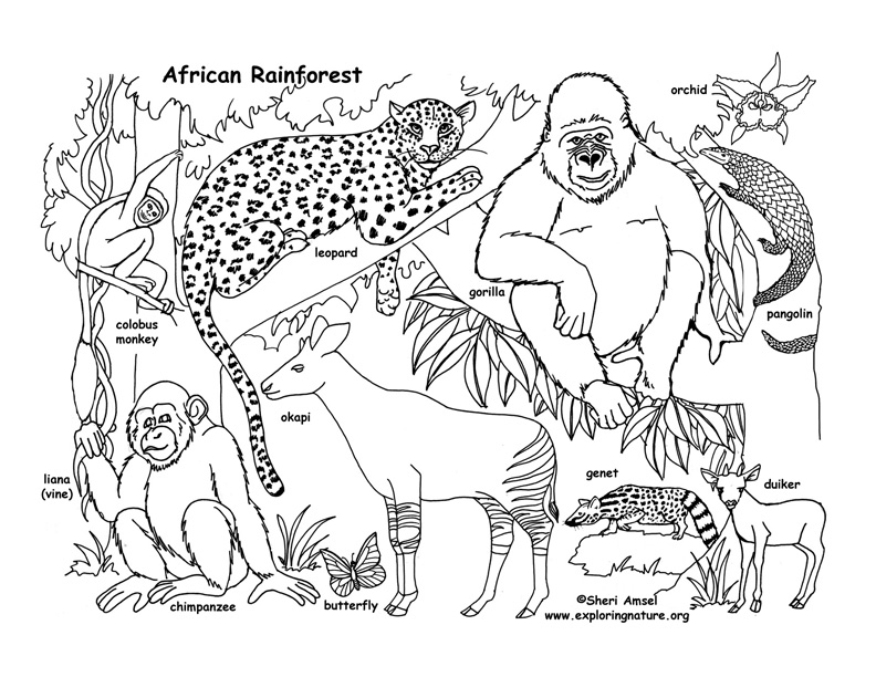 Awesome 792x612 Rainforest (African) Coloring Page