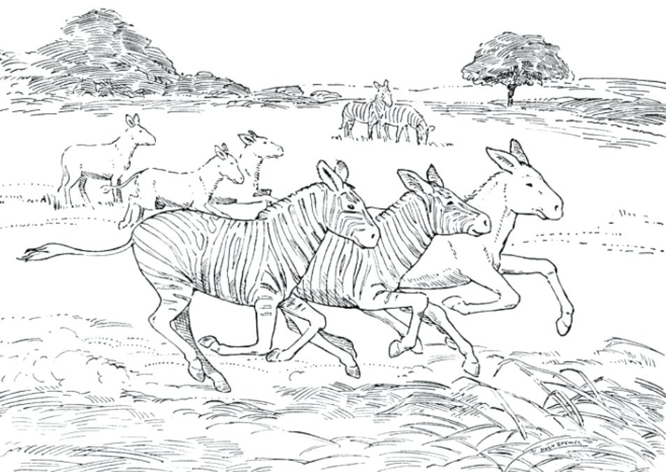 953x676 African Animals Coloring Pages Animal Coloring Pages Zebra African