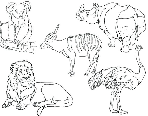 600x472 Coloring Pages African Animals
