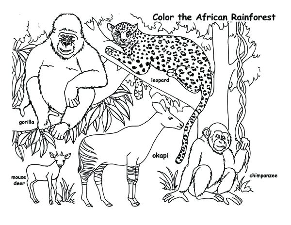 600x464 Coloring Pages African Animals Page