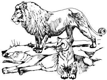 350x261 Lion Safari Coloring Pages African animals colouring pages for